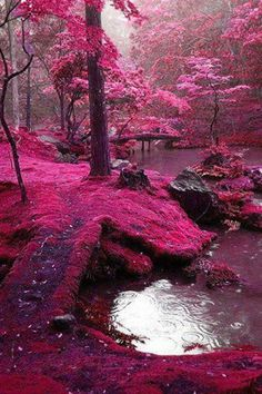 Pink moss - south korea