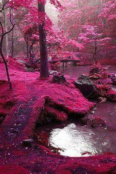 Pink moss - south korea