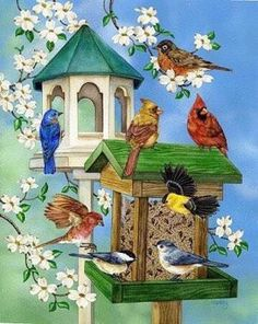 Beautiful birds at bird feeders pieces) - Daria Decoupage, Kinds Of Birds, Mural Painting, Paintings, Sky Art, Bird Drawings, Bird Pictures, Vintage Birds, Animal Wallpaper