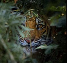 Hidden Face, Face Photo, My Favorite Image, Big Cats, Tourism, National Parks, Instagram, 1, African