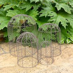 Set of four garden domes, perfect for protecting precious plants from birds…