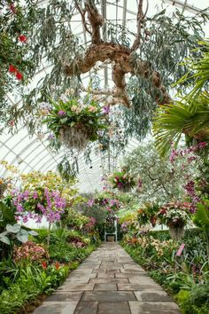 Orchid Chandeliers Breath-taking baskets, cylinders and other containers planted with thousands of tropical flowers fill the New York Botanical Garden's Conservatory in its seasonal exhibition, The Orchid Show: Chandeliers. Best Greenhouse, Greenhouse Plans, Greenhouse Gardening, Greenhouse House, Greenhouse Wedding, Pallet Greenhouse, What Is A Conservatory, Orchid House, Greenhouse Supplies