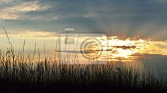 Beautiful sunset and grass silhouettes