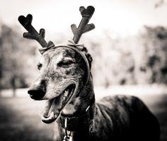 Every home needs a dog, and every dog needs a home. I hope mine has one like this.