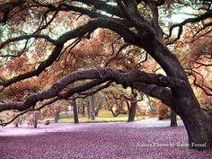 """Nature Photography, Autumn Fall South Carolina Oak Trees, Old Oak Trees, Autumn Fall Landscape, Fine Art Photograph 6"""" x 8"""""""
