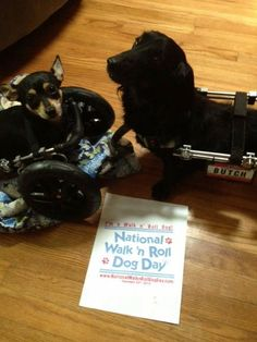 Butch and Roo are walk n roll dogs and support National Walk 'N Roll Dog Day- honoring and celebrating all dogs in wheelchairs who teach us to embrace each day with love, hope and joy. www.nationalwalknrolldog.com