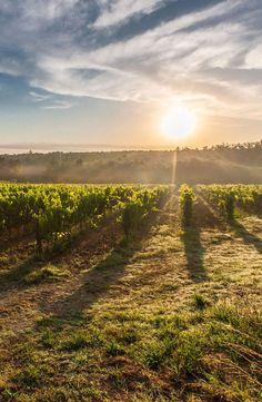 Vines 101: Chianti Wine.  http://www.butterfield.com/blog/2013/02/25/vines-101-chianti-wine/  #travel #wine #guide #Italy #Tuscany #holiday #destination #trip #myBNR