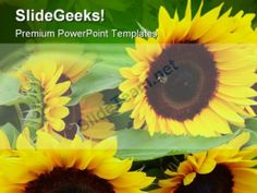 Sunflowers Nature PowerPoint Templates And PowerPoint Backgrounds 0311 #PowerPoint #Templates #Themes #Background
