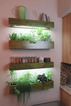 Indoor Garden Design For Easy And Cheap Home Ideas - Gardening is a hobby that is growing in pop Herb Garden Kit, Herb Garden In Kitchen, Kitchen Herbs, Garden Ideas, Wall Herb Garden Indoor, Herbs Garden, Easy Garden, Indoor Plant Shelves, Indoor Plants