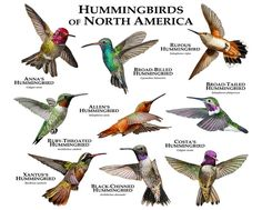When it comes to birds, avid watchers know that you can never have too many bird houses in your yard. Birds appreciate these items during the nesting and migration seasons, which can just about cover the entire year in some areas. Little Birds, Love Birds, Beautiful Birds, Animals Beautiful, Hummingbird Garden, Hummingbird Food, Hummingbird Nectar, Hummingbird Symbolism, Hummingbird Colors