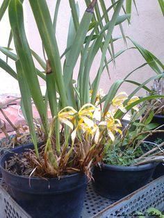 Lindas orquídeas!