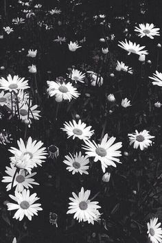 Aesthetic Desktop Wallpaper, Iphone Background Wallpaper, Computer Wallpaper, Pale Tumblr, Cute Backgrounds, Daisy, Like4like, Black And White, Pretty