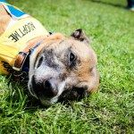 Whats On  The Latest London Dog Events For Spring