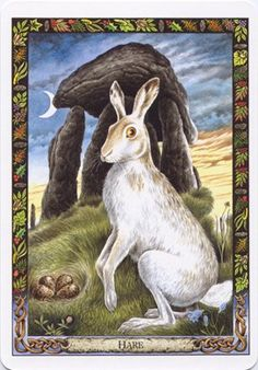 Druid Animal Oracle I use this deck all the time, beautiful and the hardcover book that comes with this deck is very detailed.