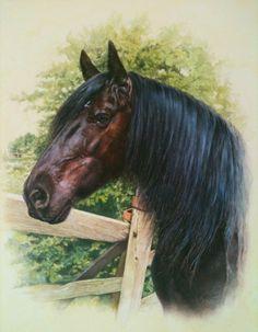 Megan Burford - Paintings of Racehorses