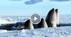 This 2-Minute Video Isthe Best Thing I've Ever Seen About Nature. ICould Rewatch ItEndlessly!