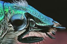 El escarabajo verde! by Ángel Febrero, via Flickr