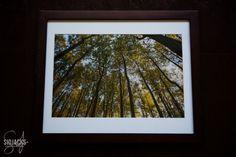 Golden Canopy by SidJacksPhotography on Etsy