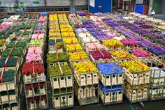 48 Million Flowers and Plants pass through the Aalsmeer Auction each day! - Aalsmeer Flower Auction - The Netherlands | CheeseWeb