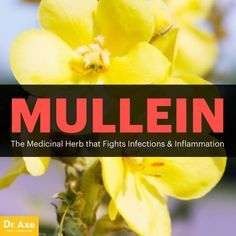 Mullein: The Medicinal Herb that Fights Infections & Inflammation - Dr. Axe