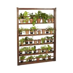 The Henrietta Plate Rack, made of 19th-century salvaged wood, is ready to display your favorite kitchen items. Keep herbs close to your cutting board by placing rows of herb pots on its attractive shel...  Find the Henrietta Plate Rack, as seen in the Retronaut: The Hip Homesteader Collection at http://dotandbo.com/collections/retronaut-the-hip-homesteader?utm_source=pinterest&utm_medium=organic&db_sku=111468