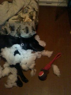 Sleeping in his mess... for a sturdy dog bed make your own or buy heavy duty