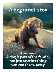 Emotional Quotes about Dogs is Family Images - What more to say other than we just LOVE cool stuff!