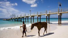 Horse on the beach in Barbados