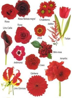 "Flower names by Color Have you ever found a picture of a bouquet and wondered, ""What is that flower?"" Here is a collection of flower names sorted by color. A few bouquet examples are at the bottom and so… Types Of Flowers, Colorful Flowers, Beautiful Flowers, Flowers Name List, Flower Colors, Orange Flowers, Pink Roses, Beautiful Pictures, Red Wedding Flowers"