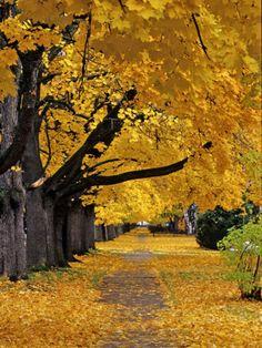 Autumn Maple Trees, Missoula, Montana, USA Photographic Print