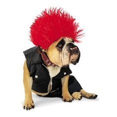 Punk rock dog costume. #pets