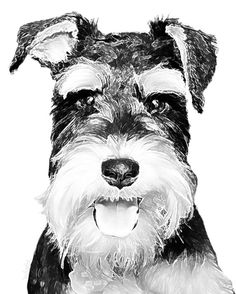 Schnauzer Fine Art Print - 8x10 Black and White Work of Art digitally enhanced from a High Quality Photograph on Etsy, $29.00