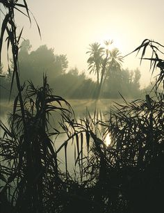the Nile River Moses | growing along the banks of the Nile River. In a spot like this, Moses ...