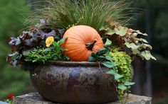 20 Fabulous Fall Container Garden Ideas 20 Fabulous Fall Container Garden Ideas,Garten Looking for garden ideas for your fall décor? Check out our gallery; it contains 20 amazing container ideas that you will quickly. Autumn Garden, Easy Garden, Autumn Fall, Pumpkin Garden, Pumpkin Planter, Garden Tips, Winter, Container Plants, Container Gardening