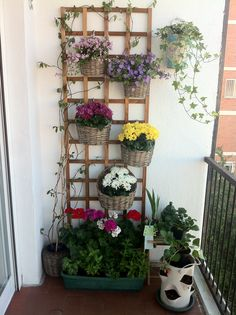 Pequeño jardín vertical en la terraza. Vertical garden.