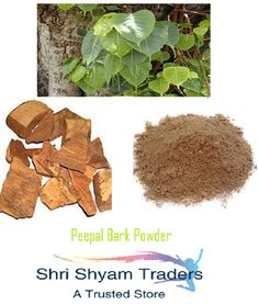 Indian Ficus Religiosa Peepal Pipal Bark Powder High Quality Ayurvedic Herb #Unbranded