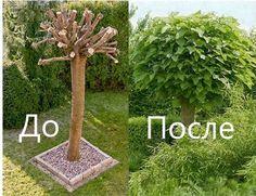Обрезка сада Услуги по обрезке плодовых деревьев и кустарников в Москве и Московской области. Консультация и выезд специалистов по тел.:+7 (495) 642-38-90, +7(985) 805-37-09, +7 (926) 038-98-90 Email: info@vashsad24.com С Уважением, компания, Ваш сад 24. Консультации БЕСПЛАТНЫЕ.