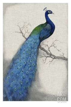 Peacock Blue I Giclee Print by Tim O'toole at Art.com This one has more purplish-blues.  Has another one facing the opposite direction.