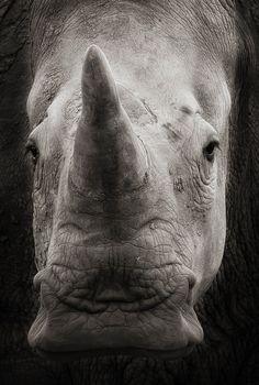 Into The Wild: Dangerous Animals Wildlife Photography
