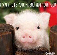 I am NOT a mini, micro, teacup etc. pigs that STAY SMALL do not exist . Please reconsider buying a pig. for the pig's sake !!