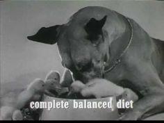 ▶ 1960's Gravy Train Commercial - YouTube