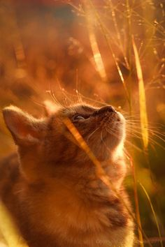 """RANDOM CAT THOUGHT: """" I think that I shall never seez, a prettier thing than de setting sun and meez."""""""