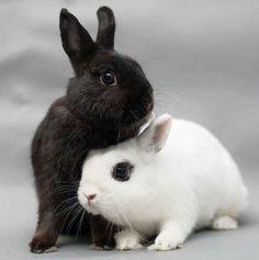 Los Angeles Rabbit Foundation