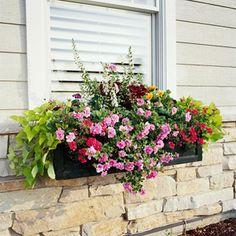 Easy to grow window box planter flower recipes