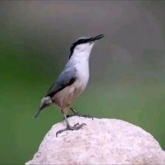 Funny Cute Cats, Funny Birds, Cute Birds, Pretty Birds, Cute Funny Animals, Cute Animal Memes, Funny Animal Videos, Exotic Birds, Colorful Birds