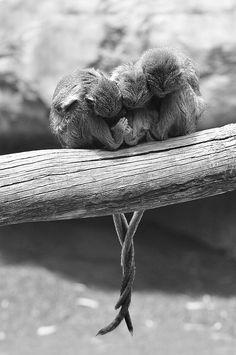 Three little monkeys, so cute.