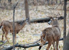 Bowhunter's Mark Morrison tells you all you need to know about how to pattern deer in the rut.