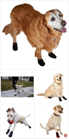 Shop Target for pet protective footwear you will love at great low prices. Free shipping on orders of $35+ or free same-day pick-up in store.