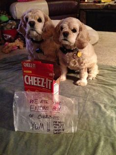"We ate the entire box of Cheeze-Its... again... The devil made us do it."" ~ Dog Shaming shame - Cocker Spaniel (This could be Milo and Tucker)"
