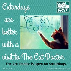 The Cat Doctor Ventura is open on Saturdays.  www.thecatdoctorventura.com